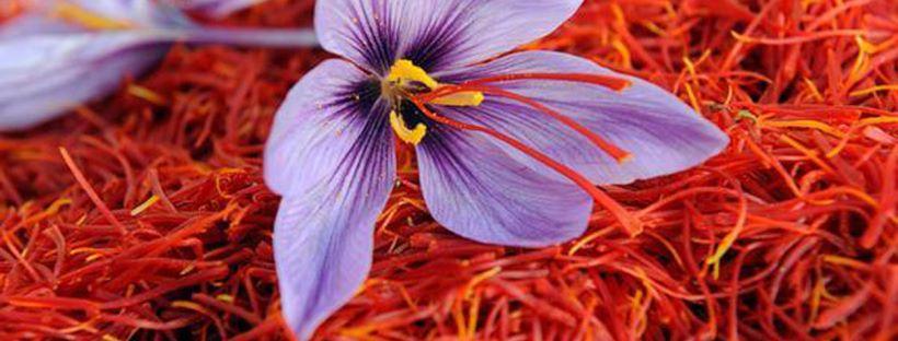 Oggi vi vogliamo parlare dello ZAFFERANO, fiore d'oro