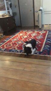 kilim per sotto tavolo